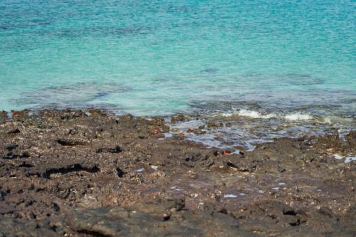 Da krabbeln Krabben, Chinese Hat, Galápagos, Ecuador 2019