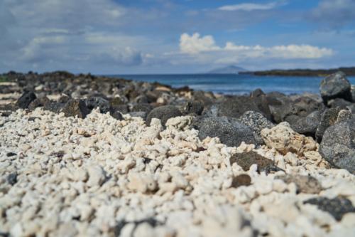 Angeschwemmte Korallen, Chinese Hat, Galápagos, Ecuador 2019