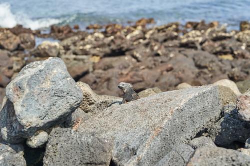 Ich seh dich, Chinese Hat, Galápagos, Ecuador 2019
