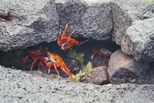 Sally steht Kopf, Chinese Hat, Galápagos, Ecuador 2019