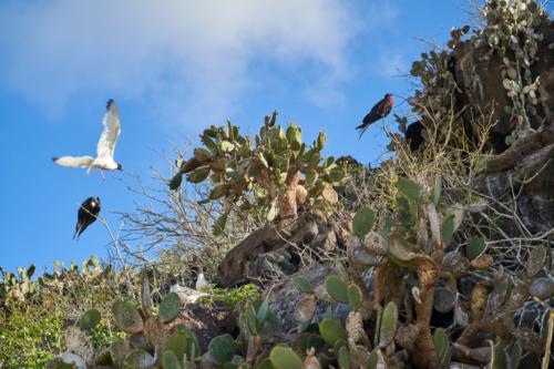 Alle Vögel sind schon da, Genovesa, Galápagos, Ecuador 2019