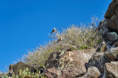 Alles im Blick, Genovesa, Galápagos, Ecuador 2019