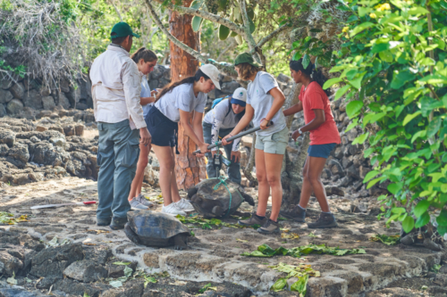 Schildkröten wiegen, Charles Darwin Station, Santa Cruz, Galápagos, Ecuador 2019