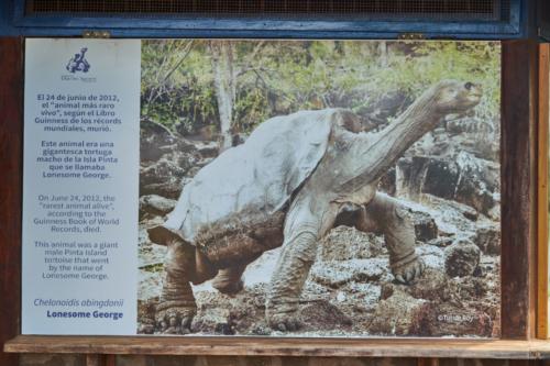 Lonesome George, Charles Darwin Station, Santa Cruz, Galápagos, Ecuador 2019