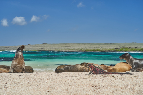 In der Sonne faulenzen, Española, Galápagos, Ecuador 2019