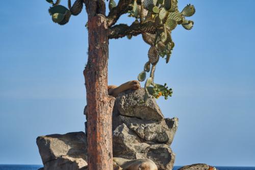 Den unterm Kaktus nicht vergessen, Santa Fe, Galápagos, Ecuador 2019