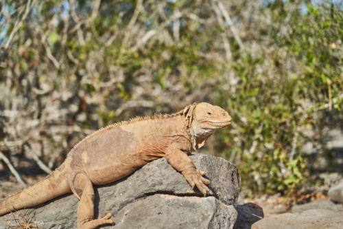 Siehste, Santa Fe, Galápagos, Ecuador 2019