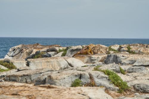 Dafür ne schöne Aussicht, South Plaza Island, Galápagos, Ecuador 2019