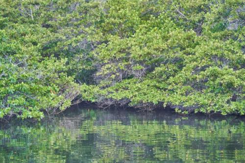 Endlich wieder Mückenstiche, Black Turtle Cove, Galápagos, Ecuador 2019